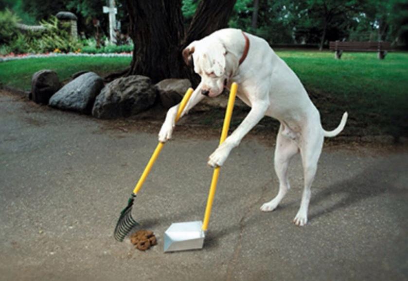 A ética do cachorro