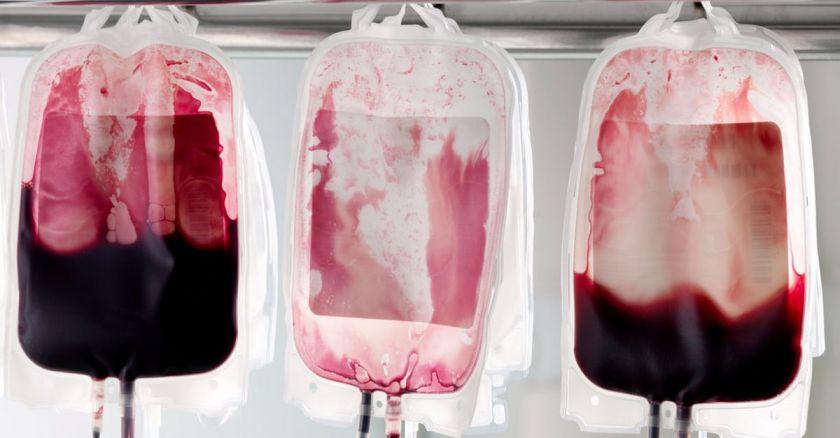 O sangue dos loucos