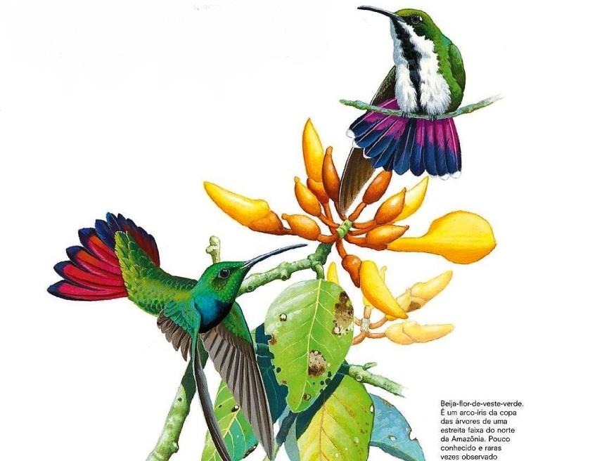 A dura vida do beija-flor.4