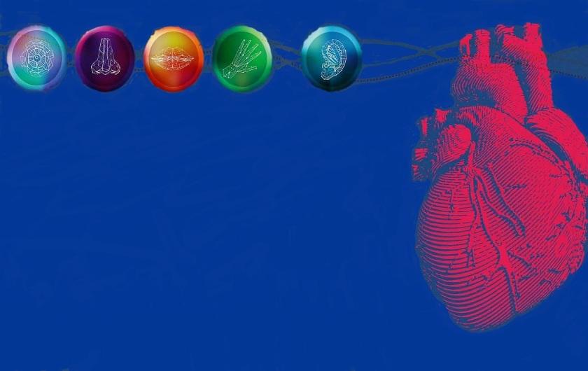 Batimentos cardíacos podem enganar percepções