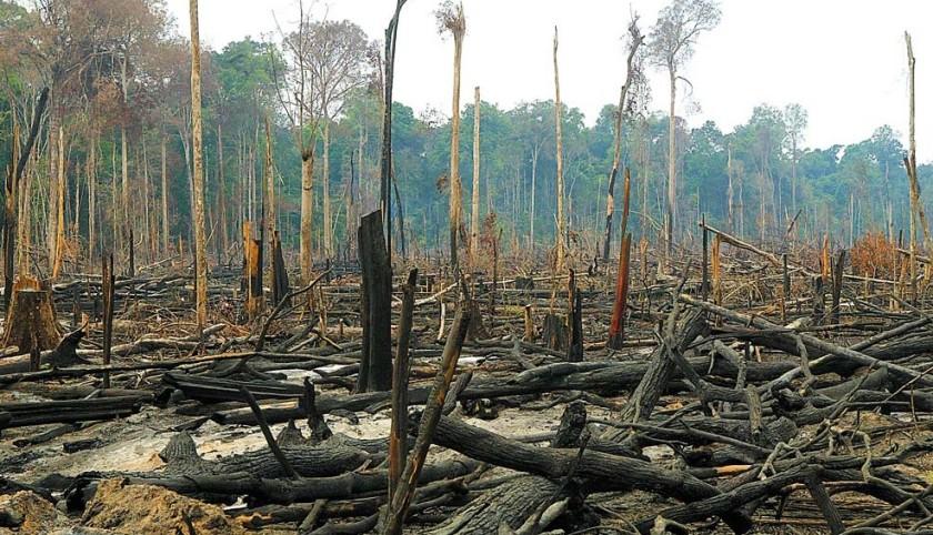 O avanço do desmatamento