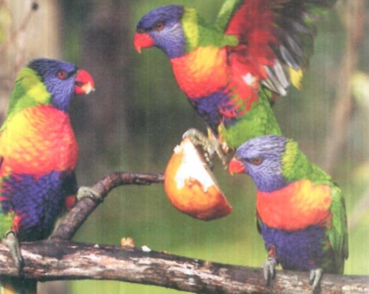 O que so as aves enxergam