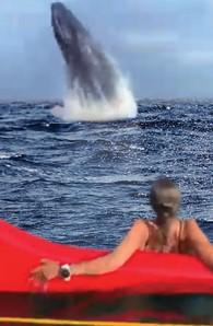 A festa das baleias. 2
