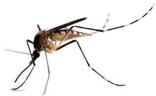 A praga da dengue.jpg