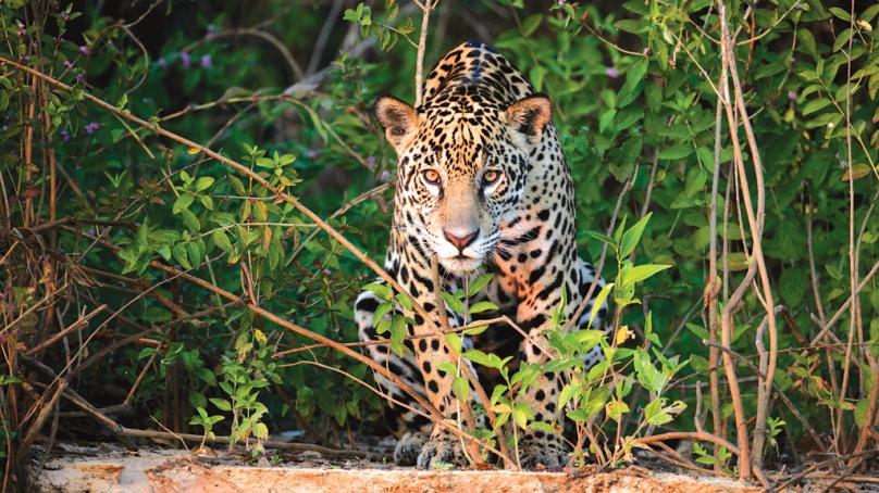 Desejo animal de extinção