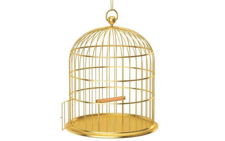 O perigo da gaiola dourada